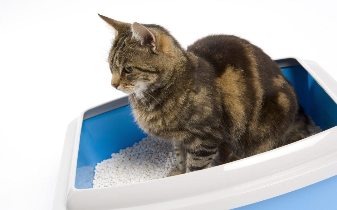 AMICI ANIMALI – Le cistiti nel gatto