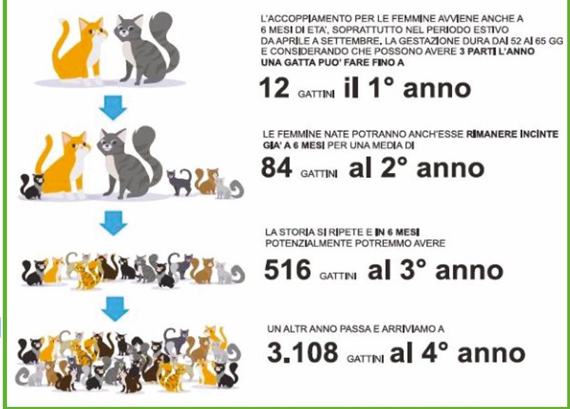 RUBRICA – Sterilizzazione del gatto: i motivi per farlo