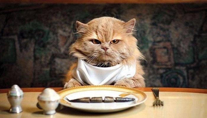 """RUBRICA- Stanchi della solita """"minestra""""?"""
