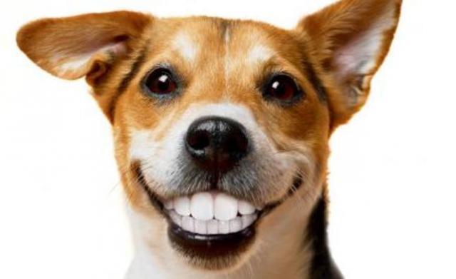 Un sorriso brillante a quattro zampe