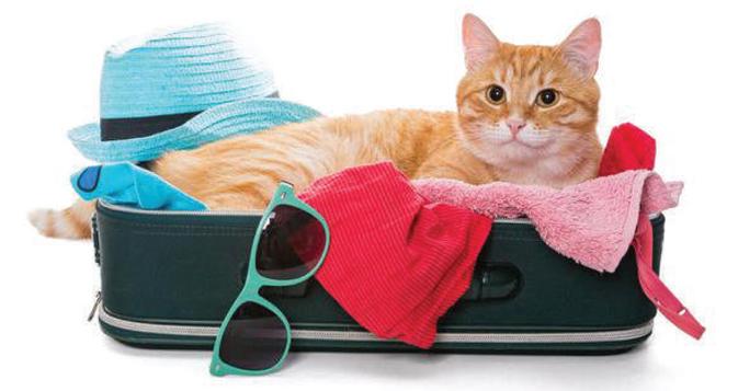 Arriva l'estate: in vacanza con il gatto