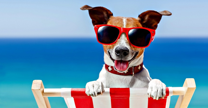 Toc toc estate: in vacanza con il cane